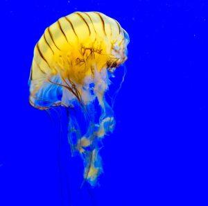 Contatto da medusa cosa non fare
