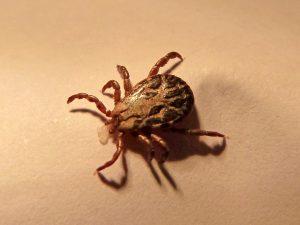 Malattia di Lyme prevenzione